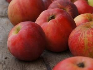 сочные яблоки