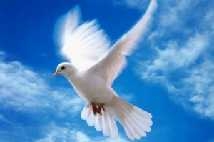 белокрылая голубка на фоне синего неба