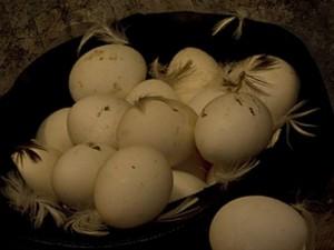 куриные яица