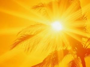 лучи солнца пробиваются сквозь листья пальмы