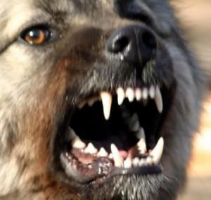 острые клыки в пасти собаки