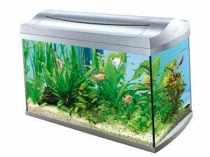 большой аквариум с водорослями и красивыми рыбками