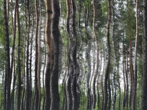 природная аномалия - искривление деревьев в лесу