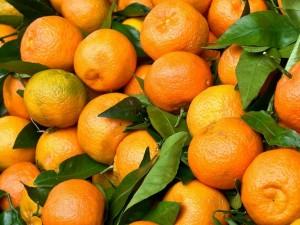 сладкие, сочные, спелые, оранжевые апельсины