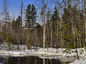 снег тает в апрельском лесу у ручья